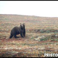 Как спастись от медведя в лесу Как необходимо вести себя 2