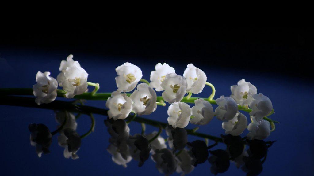 Красивые картинки цветов на рабочий стол - скачать подборка №1 10