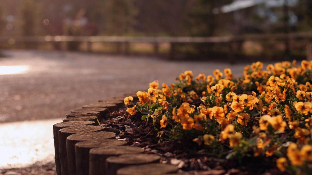 Красивые картинки цветов на рабочий стол - скачать подборка №1 9