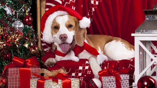 Новогодние картинки 2018 в год собаки - скачать бесплатно, очень красивые 6