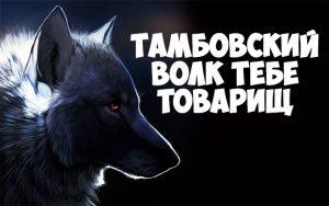 Откуда пошло выражение Тамбовский волк тебе товарищ - интересное 1