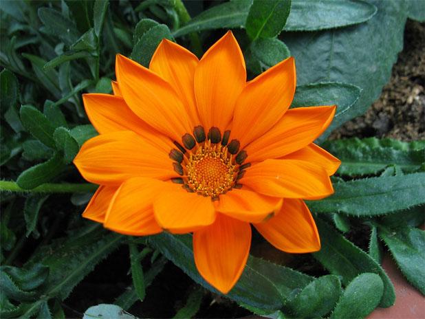 Очень красивые картинки цветов и букетов - скачать бесплатно 14