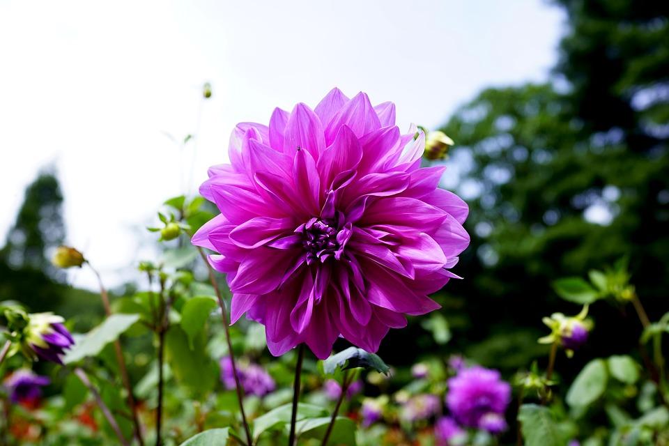 Очень красивые картинки цветов и букетов - скачать бесплатно 19