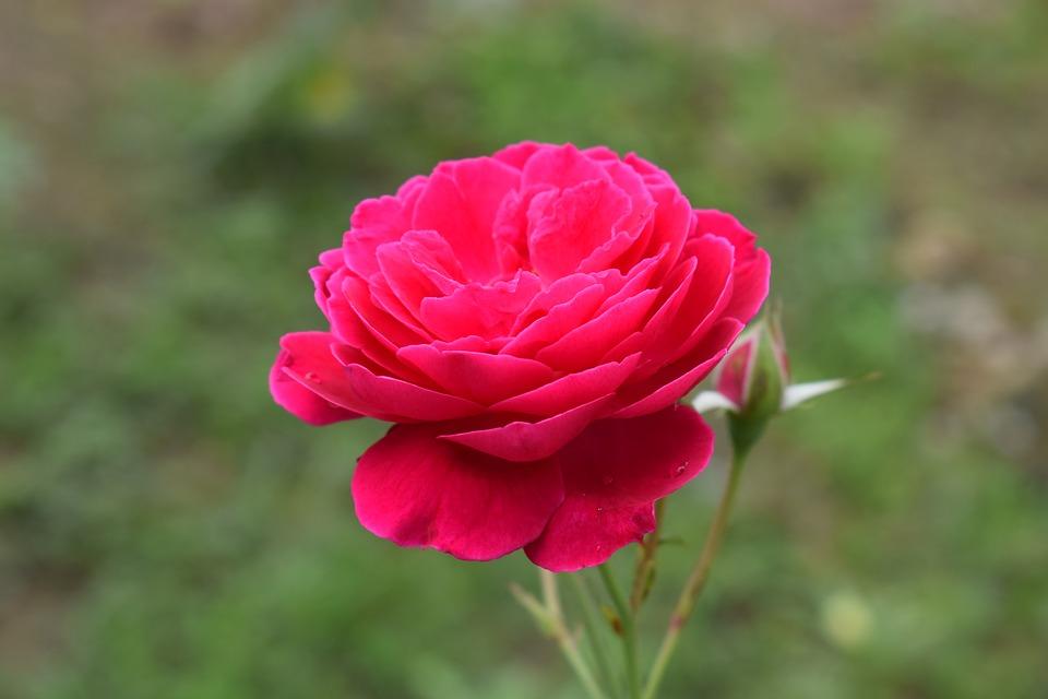 Очень красивые картинки цветов и букетов - скачать бесплатно 7