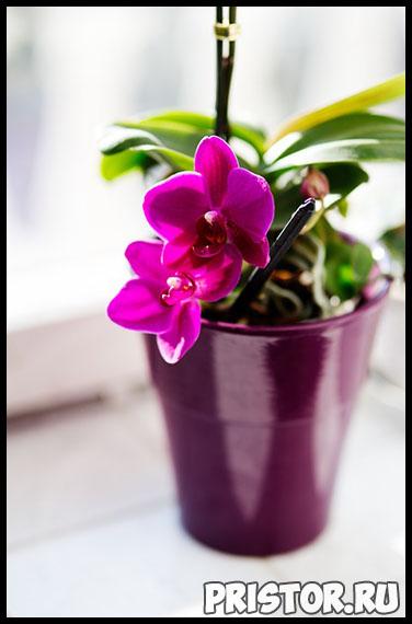 Правильный уход за орхидеей в домашних условиях - основные секреты 2