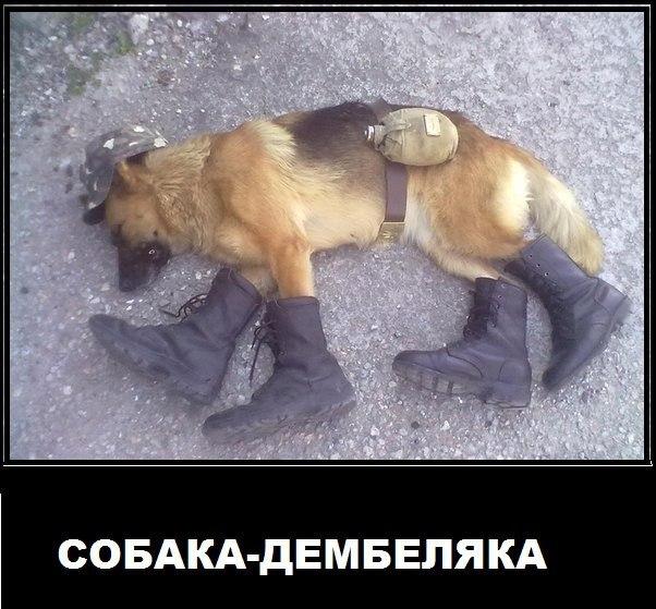 Русские приколы, чтобы поржать - самые новые и свежие, подборка №16 9