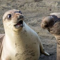 Самые смешные фото животных в 2017 году - смотреть подборку №14 7