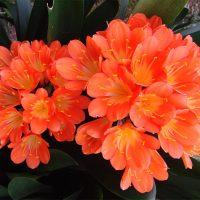 Тенелюбивые комнатные растения - для тех у кого дома плохое освещение 3