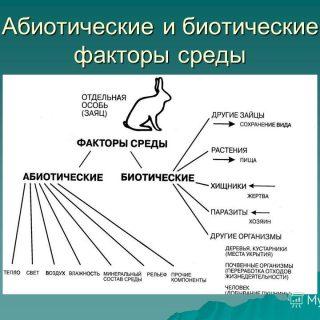 Абиотические факторы среды обитания и их влияние на живые организмы 2