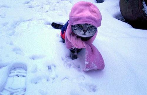 Веселые и смешные картинки про зиму и снег - забавная подборка №23 13