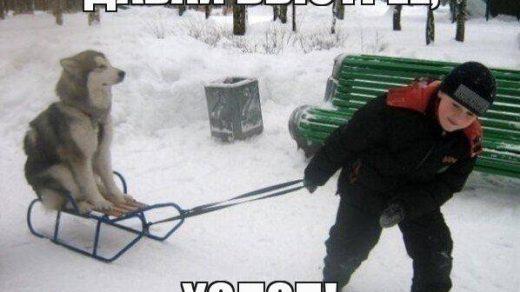 Веселые и смешные картинки про зиму и снег - забавная подборка №23 8