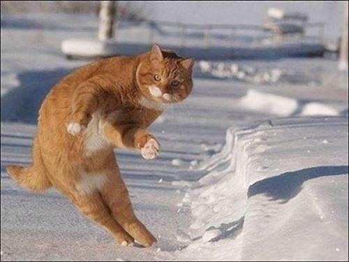 Веселые и смешные картинки про зиму и снег - забавная подборка №23 9