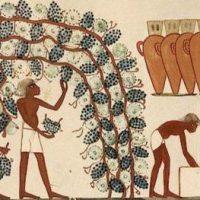 История вина и виноделия в мире - интересные факты появления напитка 2