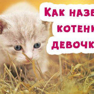 Как назвать котенка девочку, клички для кошки - лучшие варианты 1