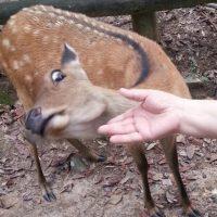 Картинки и фото про смешных оленей с надписями - угарная подборка 4