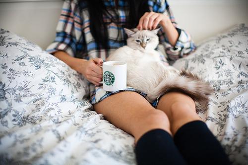 Картинки на аву кошки и коты - самые интересные и невероятные 1