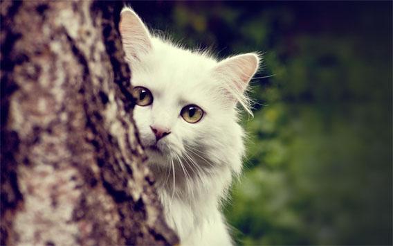 Картинки на аву кошки и коты - самые интересные и невероятные 12