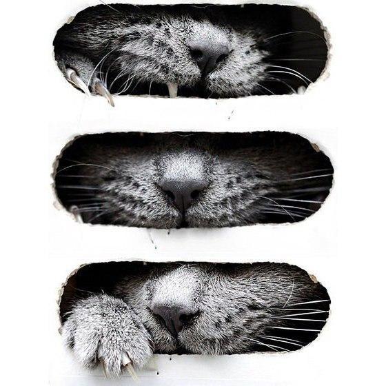 Картинки на аву кошки и коты - самые интересные и невероятные 13