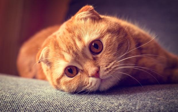 Картинки на аву кошки и коты - самые интересные и невероятные 14