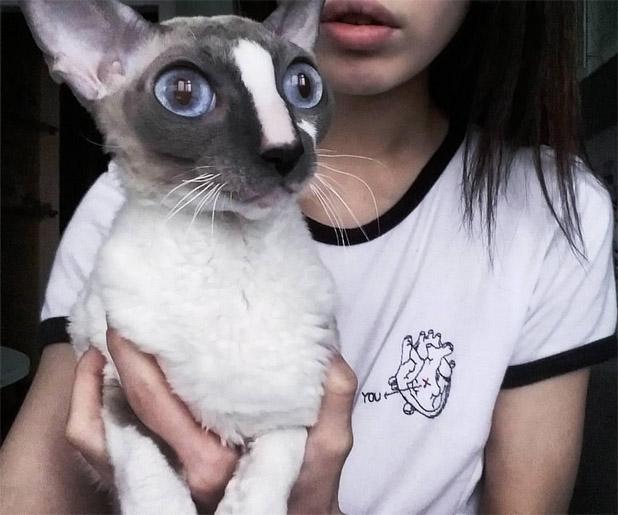 Картинки на аву кошки и коты - самые интересные и невероятные 2