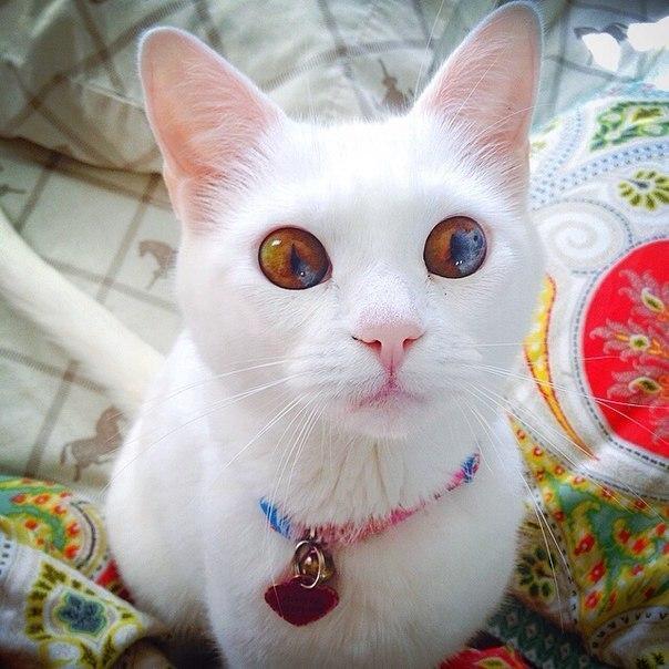 Картинки на аву кошки и коты - самые интересные и невероятные 4