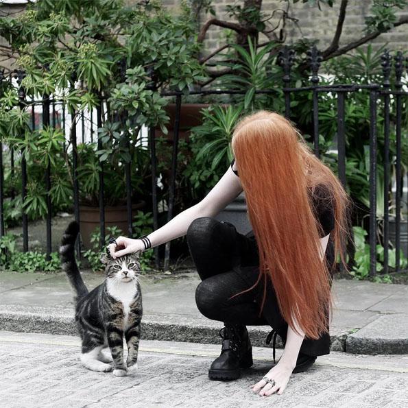 Картинки на аву кошки и коты - самые интересные и невероятные 6