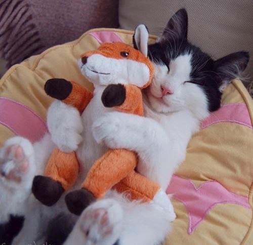 Картинки на аву кошки и коты - самые интересные и невероятные 7