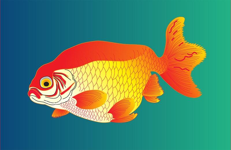 Красивые и прикольные картинки рыб для детей - лучшая подборка 7