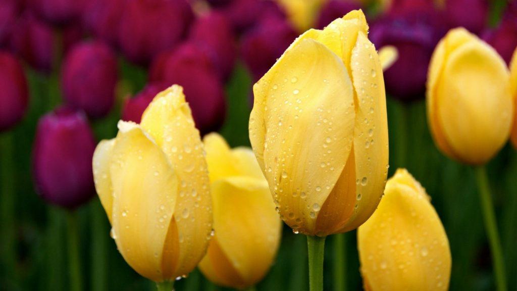 Красивые картинки цветов на рабочий стол - скачать подборка №3 1