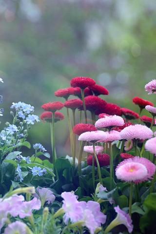 Красивые картинки цветов на телефон - скачать прикольные и классные 11