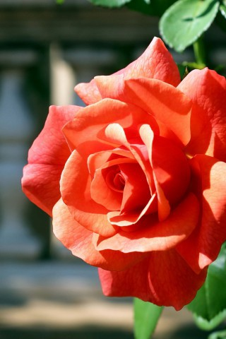 Красивые картинки цветов на телефон - скачать прикольные и классные 7