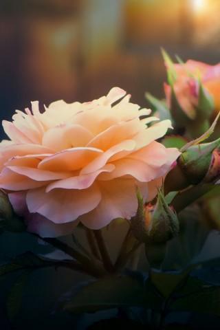 Красивые картинки цветов на телефон - скачать прикольные и классные 9