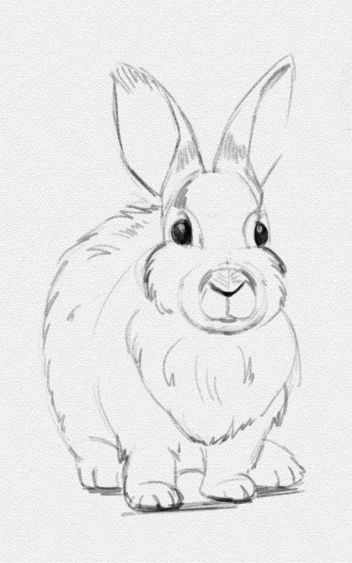 Легкие и простые рисунки карандашом для срисовки - скачать 2018 2