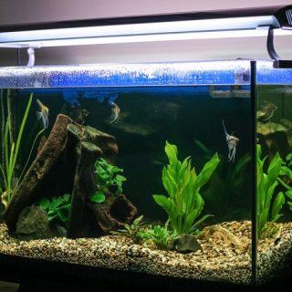 Мутная вода в аквариуме - причины и что делать Чего нужно избегать 1