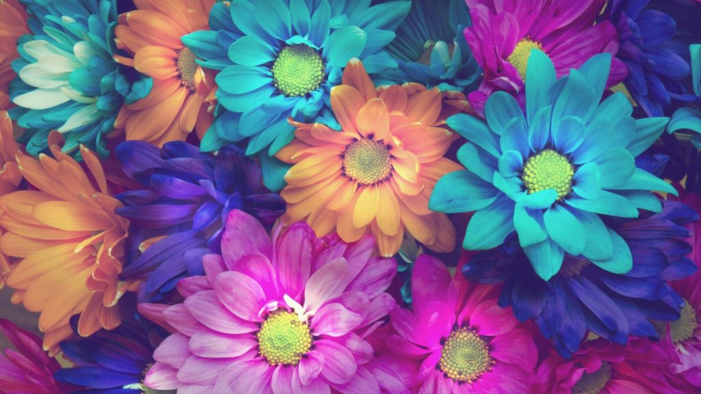 Прикольные изображения цветов на заставку компьютера - подборка №2 10