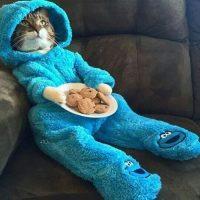 Прикольные котики - самая лучшая подборка фотографий и картинок 1
