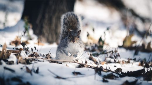 Скачать картинки про зиму и снег - самые красивые и прикольные 7
