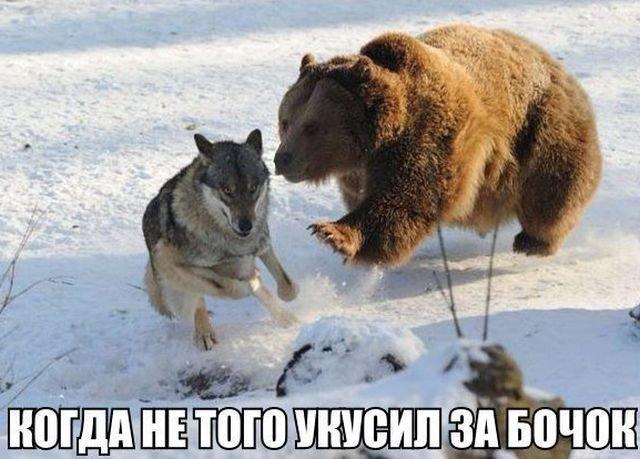 Смешные и прикольные картинки, фото собак - скачать бесплатно №21 11