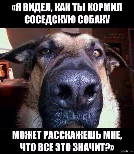 Смешные и прикольные картинки, фото собак - скачать бесплатно №21 12