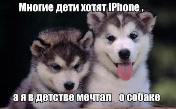 Смешные и прикольные картинки, фото собак - скачать бесплатно №21 14