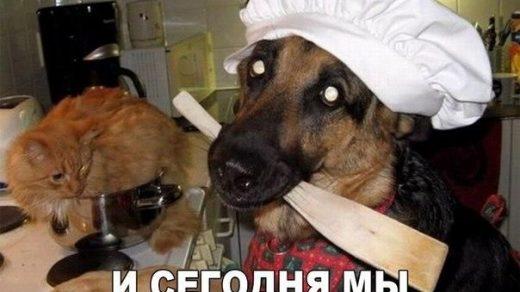 Смешные и прикольные картинки, фото собак - скачать бесплатно №21 16