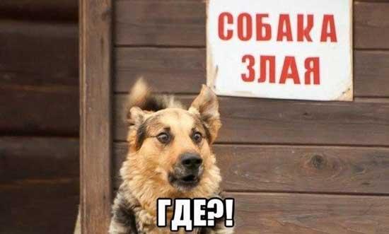 Смешные и прикольные картинки, фото собак - скачать бесплатно №21 2