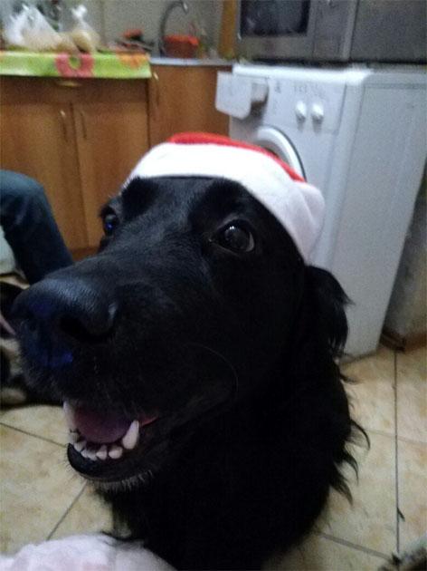 Смешные и прикольные картинки, фото собак - скачать бесплатно №21 3
