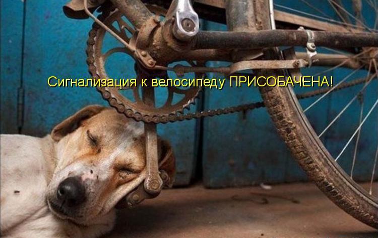 Смешные и прикольные картинки, фото собак - скачать бесплатно №21 4