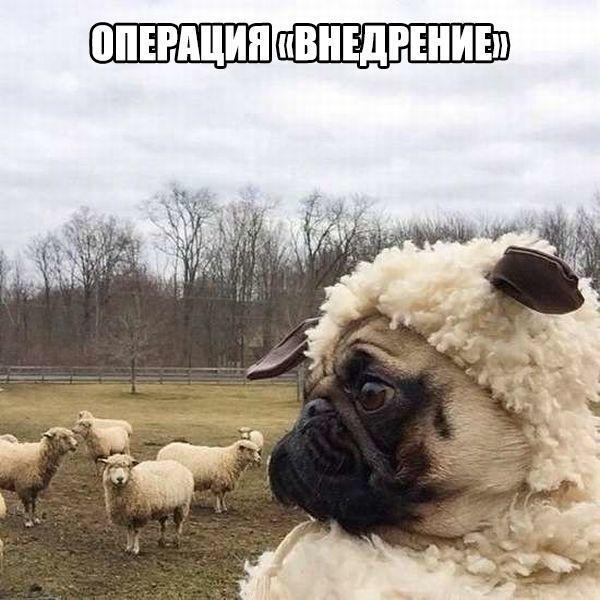 Смешные и прикольные картинки, фото собак - скачать бесплатно №21 6