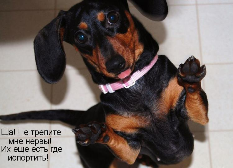 Смешные и прикольные картинки, фото собак - скачать бесплатно №21 7