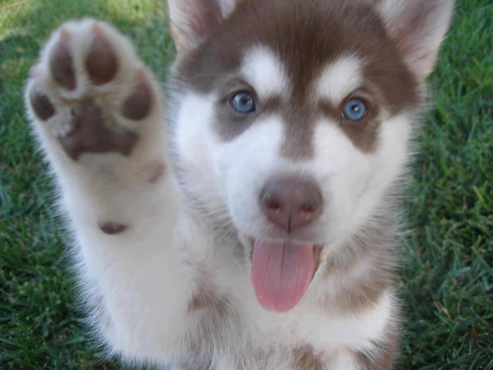 Смешные и прикольные картинки, фото собак - скачать бесплатно №21 8