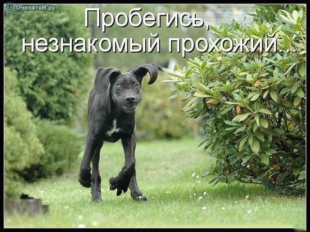 Смешные и прикольные картинки, фото собак - скачать бесплатно №21 9