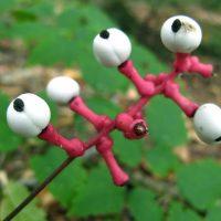 Топ-8 самых ядовитых растений на нашей планете - интересное в мире 6
