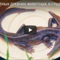 10 невероятных древних животных, в существование которых сложно поверить - видео